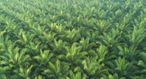 BASF & Partners to Promote Sustainable Palm Oil & Derivatives Production