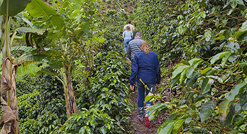 S&D Coffee & Tea Releases 2019 Sustainability Report