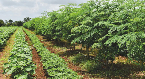 Study identifies best organic cotton practices