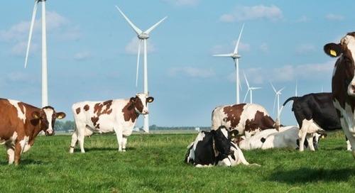The Sustainable Dairy Partnership unites industry-wide push towards global sustainability