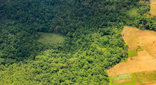 Les incendies d'Amazonie signent le réveil des entreprises sur la traçabilité de leurs chaînes d'approvisionnement