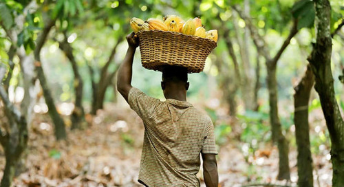 If We Want To Achieve The UN's Sustainable Development Goals, We Need To Start Increasing Farmers' Incomes
