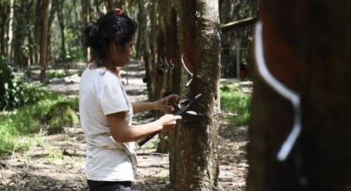«L'huile de palme est le sujet le plus controversé car le plus médiatisé, mais regardons le caoutchouc»