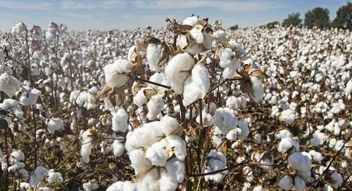 Primark Cares : flou sur son coton durable