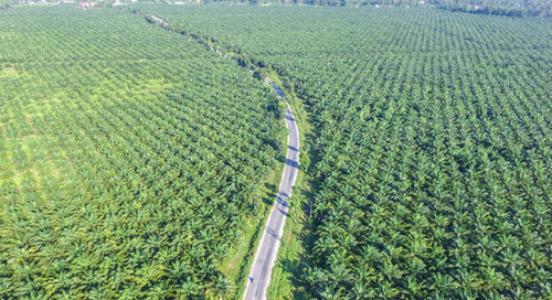 Ferrero shares list of 2018 palm oil suppliers in transparency commitment