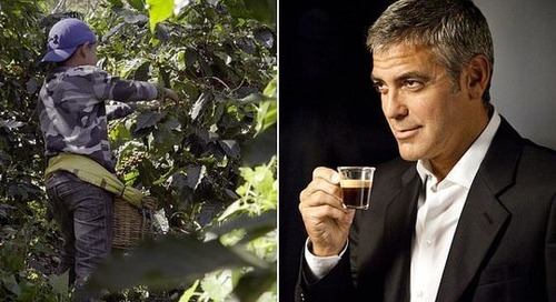 George Clooney's coffee giant Nespresso admits buying beans from child labour farms