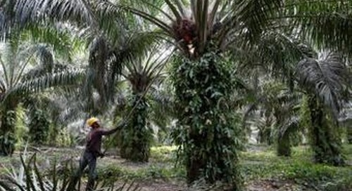 Palm oil giants say sustainability is the new business norm