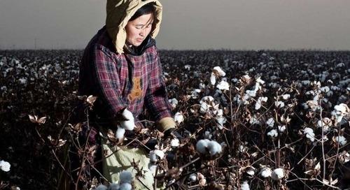 Cotton Ranking 2020: Adidas führt, deutsche Unternehmen auf dem Vormarsch