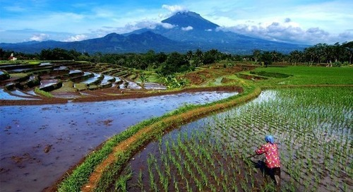 New consortium to reduce environmental footprint of rice production