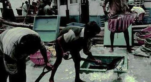 Modern slavery promotes overfishing