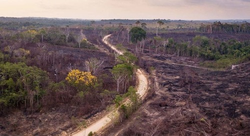 Fifth of Brazilian beef exports to EU linked to illegal deforestation