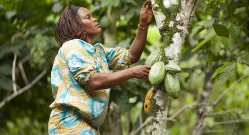 Mars announces new conservation partner to improve its cocoa supply-chain