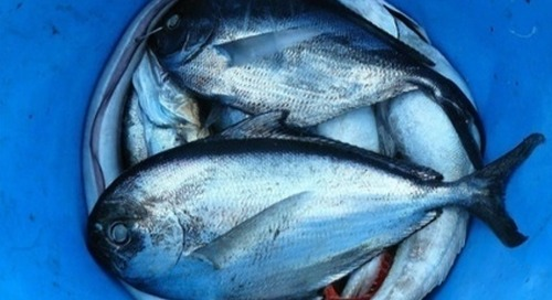 Sustainable Seafood a Key to Improving Climate Impact