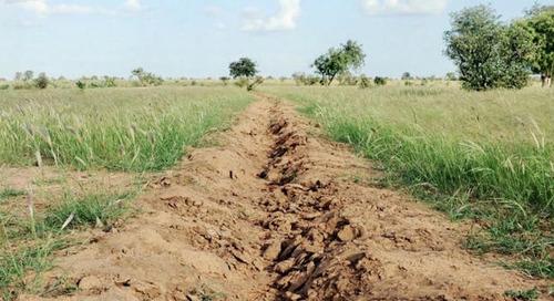 La Grande muraille verte, vecteur de développement durable au Sahel
