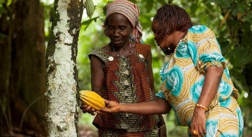 'Brands can help end tropical deforestation, but only by working together'