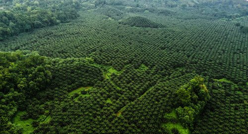 Honduran palm oil sector commits to deforestation-free supply chain