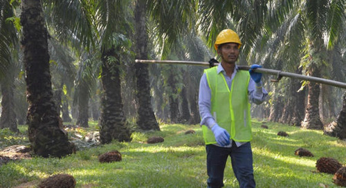 Breaking down Mars' maverick move for a more sustainable palm oil supply chain