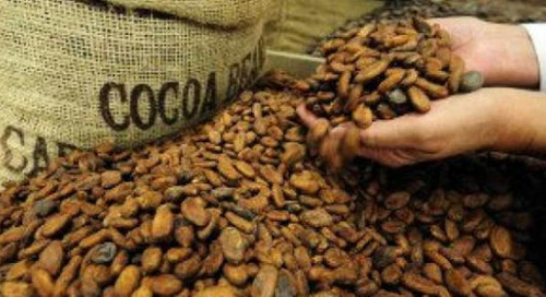 Cocoa Trader Olam Says New EU Law May Force It To Drop Some Suppliers
