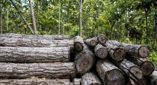 China's revised forest law could boost efforts to fight illegal logging