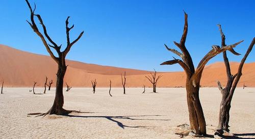 Continent très menacé par le changement climatique, l'Afrique est aussi l'un des plus engagés