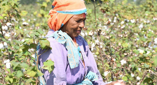 Bestseller to Support Farmers in Transition to Organic Cotton