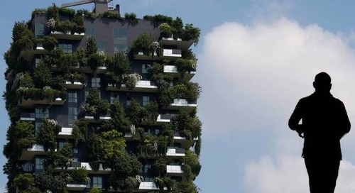 U.N. plans vast urban forests to fight climate change