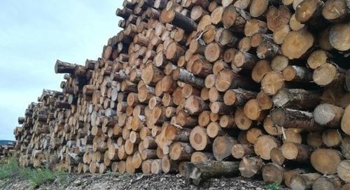 À l'heure de la relance, quelle place pour le bois-énergie ?