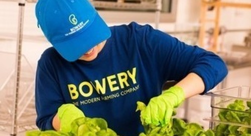 Gotham Greens opens its largest greenhouse in Chicago