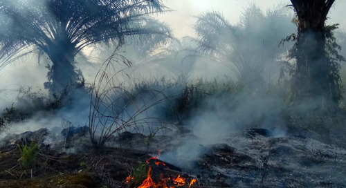 RSPO adopts total ban on deforestation under sweeping new standards
