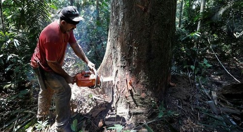 Brazil's Shrinking Rainforest Prompts Nestlé, H&M, Others to Shake Up Supply Chains