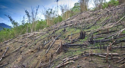 Experts question integrity of Indonesia's claim of preventing deforestation