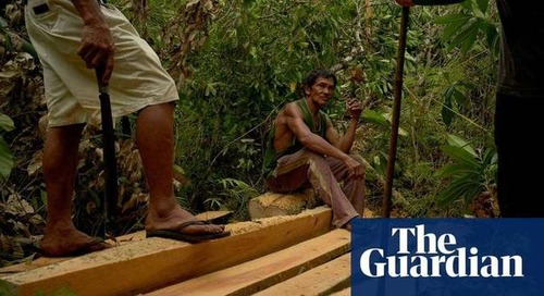 UK to lead global fight against illegal logging and deforestation