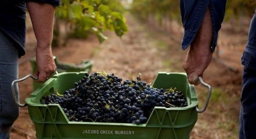Pernod Ricard Winemakers First Large Australian Wine Company to Achieve 100% Renewable Electricity