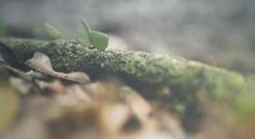 DAX 50 ESG: Auch Nachhaltigkeitsindex erholt sich rasant