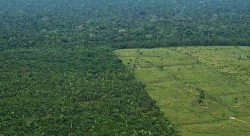 Onus on firms to show supply chains free of deforestation