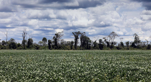 Saving the Cerrado: Six commodities traders to disclose supply chain data