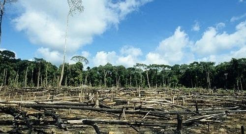 Tyson will assess its deforestation risks