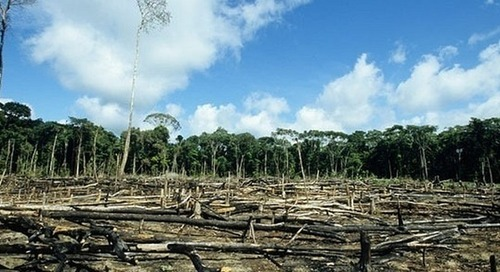 Cargill works toward deforestation-free supply chains by 2030