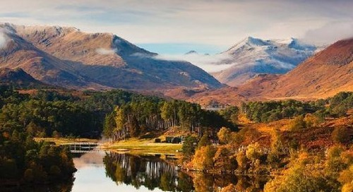 22 million trees planted in Scotland to help meet 'global climate emergency'