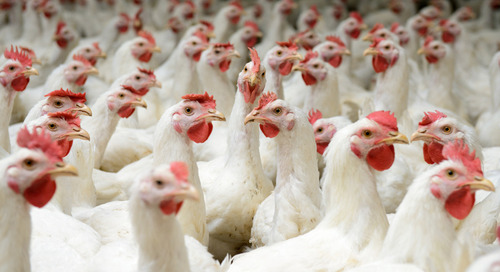 National Chicken Council unveils new sustainability resources