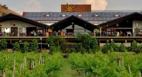 India's largest wine producer sustainability