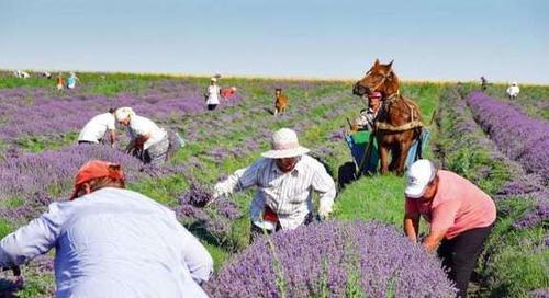Weleda unterstützt Initiative für nachhaltige Agrarlieferketten -