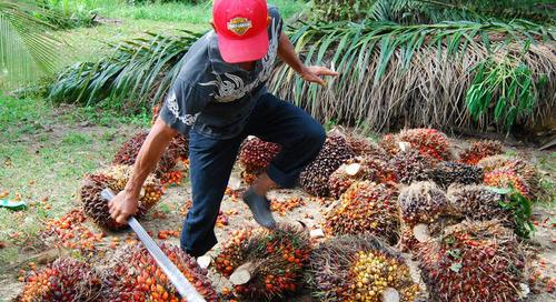 Unilever: existenzsichernde Löhne in Lieferkette bis 2030