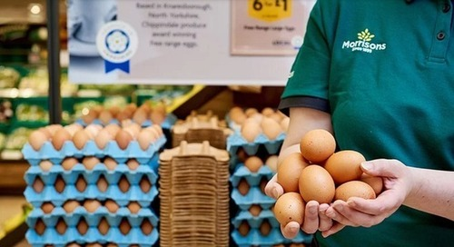 Carrefour, Morrisons commit to improved chicken welfare standards