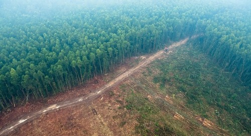 France adopts strategy to stop 'deforestation imports' by 2030