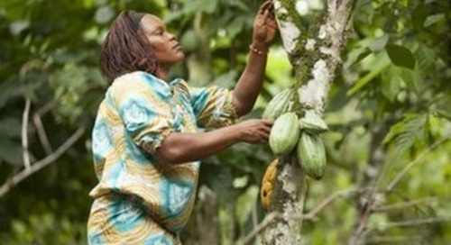 New space satellite tech set to help cocoa traceability in West Africa