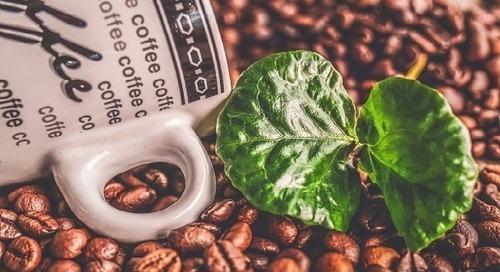 Studie: Die Kaffeebranche ist nicht nachhaltig genug