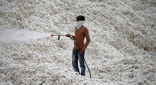 Indian state to map cotton supply chain to stamp out child labour