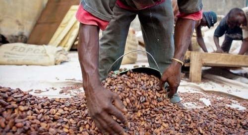 Nestlé targets sustainability in cocoa supply chain with action plan