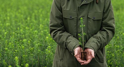 Metsä Board gewinnt beim EcoVadis-Rating eine Platinmedaille ›